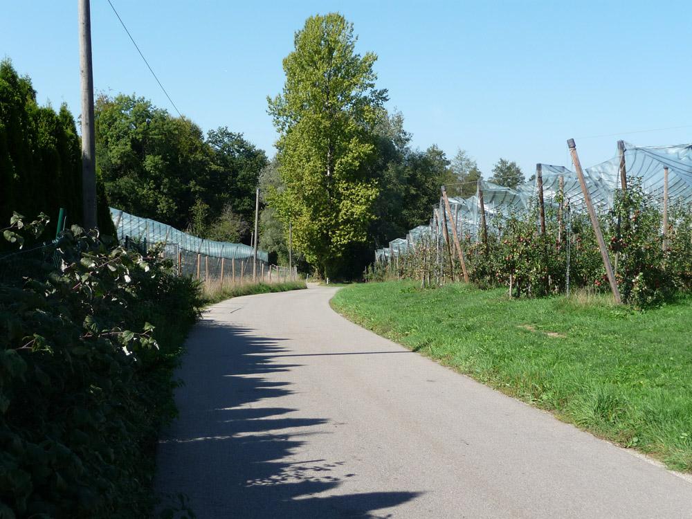 5-Seenrunde durch Obstplantagen