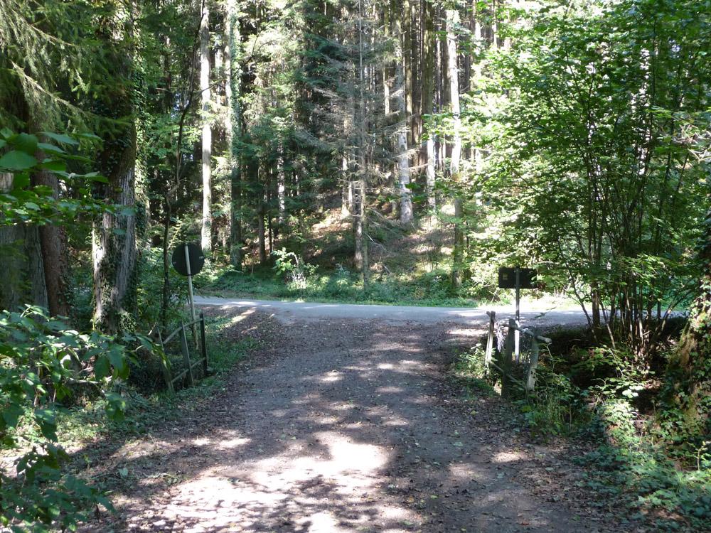 5-Seenrunde durch Wald